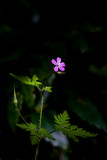 Wild flower at first morning light beaming sun ray - 209003565