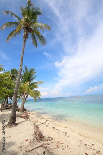 Fototapeten Strand Tropical beach scene with palm trees