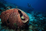 Female Scuba Diver Tropical Coral Reef Underwater