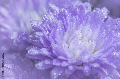 Purple flower macro background