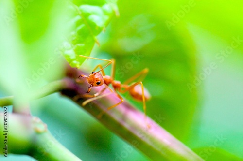 Foto Murales Closeup red ant with blurred light background