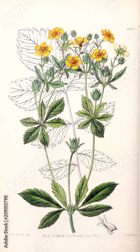 Illustration of plant - 209013798