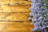 Fresh lavender - 209019763