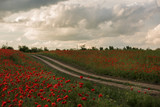 A dirt road among the poppy fields.