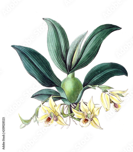 Illustration of plant - 209028523