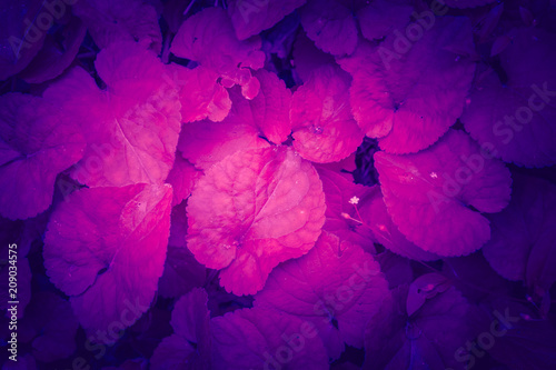 Trendy color ultra violet concept. Ultraviolet foliage abstract background. - 209034575