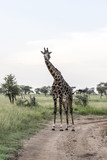 Serengeti National Park - 209036716