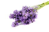 Lavender flowers isolated on white background. - 209037583