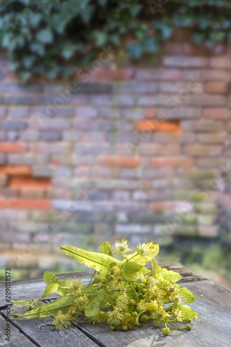 bunch of fresh linden blossom flower on wooden table with old red brick wall background.