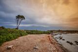 one tree sky water - 209040582