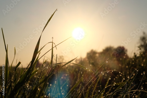 Fotobehang Zonsopgang The dew at dawn on the grass