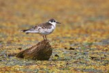 Bird at a lake - 209053984