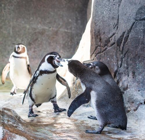 Aluminium Pinguin penguin at the zoo