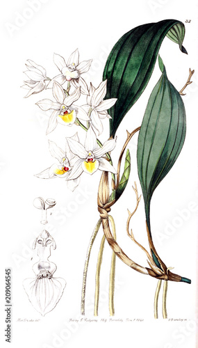 Illustration of orchid. - 209064545