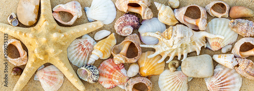 Summer beach. Seashell on the sand. - 209075323
