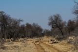 Zebra Crossing - 209083728