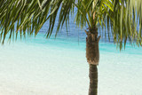 palm tree and tropical beach with beautiful colors - 209083966