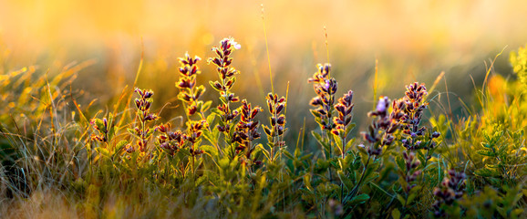 wild flowers and grass closeup, horizontal panorama photo © tankist276