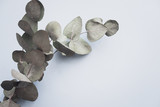 Eucalyptus on pastel blue paper background. Minimalism flat lay composition for bloggers, artists, social media,  magazines. Copyspace, horizontal - 209088944