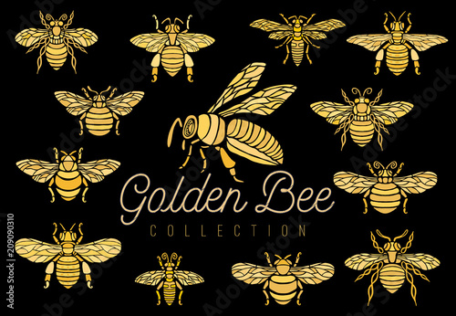 Honey bee bumblebees wasps set sketch style collection insert wings emblem symbols Hand drawn vector engraving illustration - 209090310