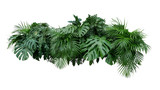 Tropical leaves foliage plant bush floral arrangement nature backdrop isolated on white background, clipping path included. - 209099377