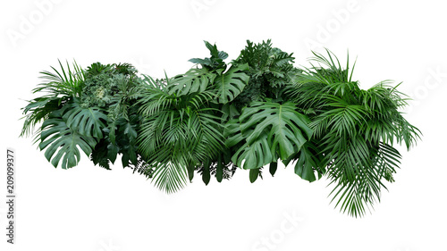 Foto Murales Tropical leaves foliage plant bush floral arrangement nature backdrop isolated on white background, clipping path included.