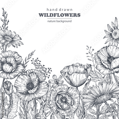 Floral background with hand drawn poppy and other flowers and plants