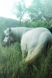 Small white pony with magic landscape - 209109177
