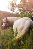 Small white pony with magic landscape - 209109318
