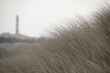 Dünen im Winter - 209118175