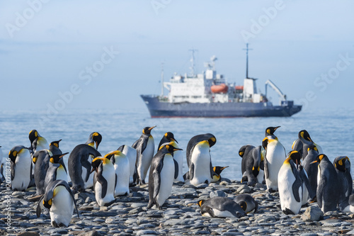 Fotobehang Antarctica King Penguins with Ship in Background, South Georgia Island, Antarctic