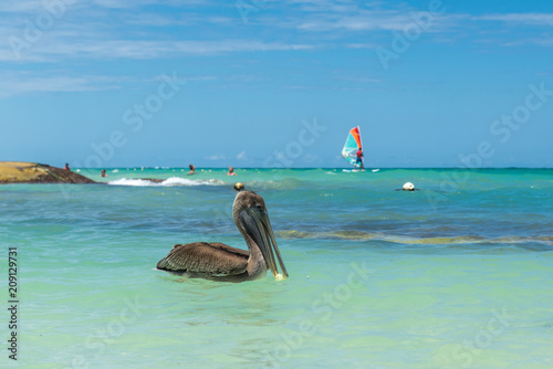 Fototapeten Strand Pelican on the beach of Dominican Republic