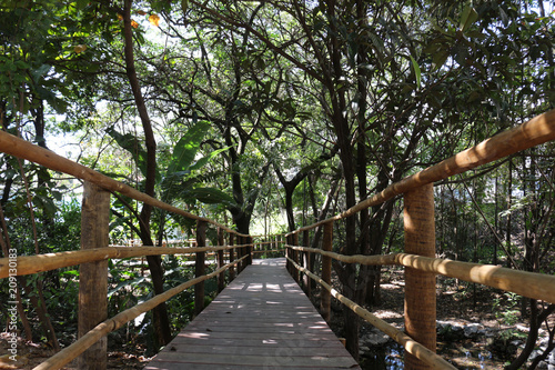 Fotobehang Weg in bos baixo angulo da ponte de madeira