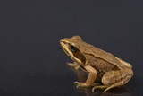 Frog on a black isolated background. Frog.  - 209139789