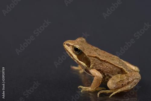 Fotobehang Kikker Frog on a black isolated background. Frog.