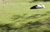 white stork - 209142782