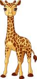 Giraffe Baby - 209143703
