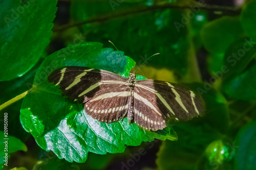 Aluminium Vlinder Butterfly-0088