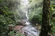 jungle falls - 209155935