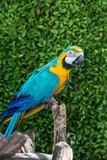 Parrot, lovely bird, animal and pet in the garden - 209156128