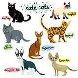 Set of cartoon cats characters - 209165739