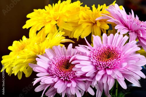 Plexiglas Gerbera Gerbera flowers bouquet