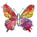 vector drawing butterfly