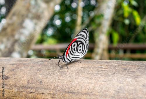 Fotobehang Vlinder butterfly at iguazu falls