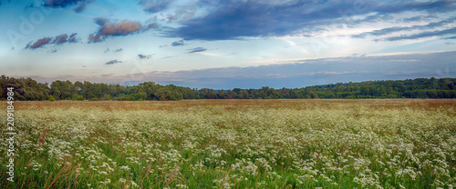 Beautiful country panorama. Nature, grass, forest. - 209184984