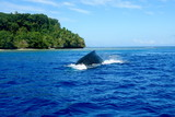 Neiafu, Vavau, Tonga