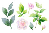 Watercolor vector hand painting set of peony flowers and green leaves. - 209192321