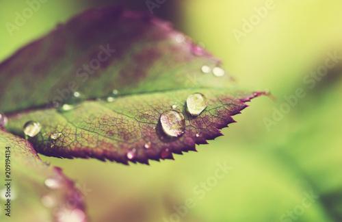 Fotobehang Galyna A. Dew drops