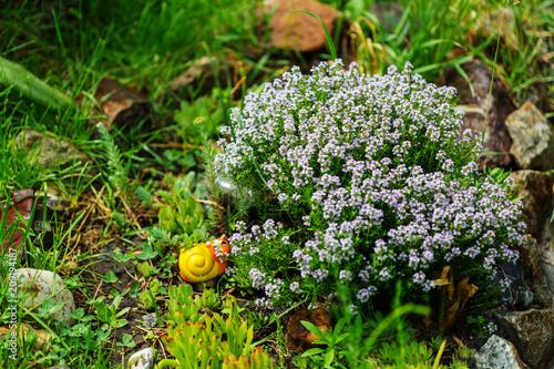 Fotobehang Galyna A. Garden decor