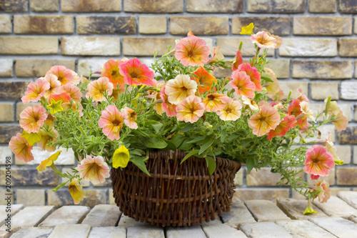 Foto Murales basket with petunias (Petunia hybrida) flowers